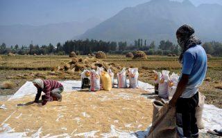 Việt Nam lần đầu mua gạo Ấn Độ sau nhiều thập kỷ
